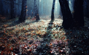 landscapes-nature-trees-forest-photography-ground-wide