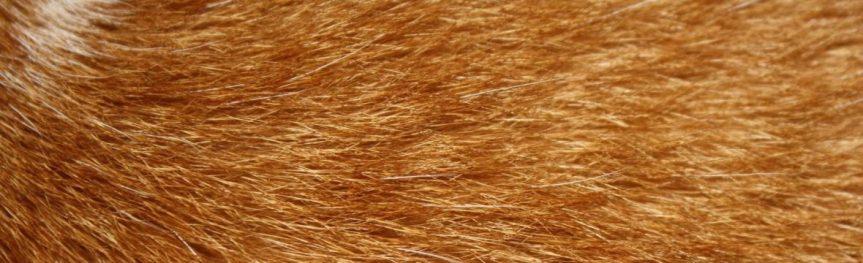 Pêlo de Gato